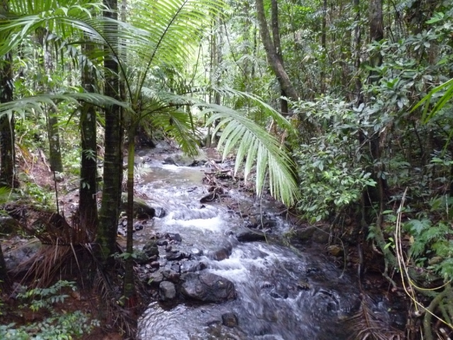 Daintree Rainforest - QUeensland (1024x768)